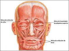 Atlas de Anatomia Humano : Sistema Muscular