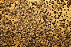 How to Disinfect Beehives