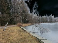 """See 50 photos and 8 tips from 635 visitors to Aulanko. """"Large forest park with pavilions and small lakes, and bear statue by Aulanko Lake - good place. Bear Statue, Small Lake, Forest Park, Country Roads, Places, Lugares"""