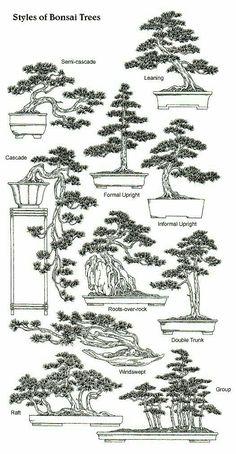 Styles of Bonsai Trees