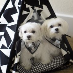 Our teepee comes with an amazingly soft cushion! We love to snuggle together! Teepee info ▶️ http://www.unitedpups.com/tent1