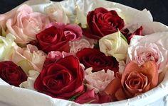 Show details for Rose ~Petals~