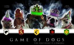 Celebramos el octavo cumpleaños de Zidane, uno de nuestros perros de apoyo, con un guiño a Juego de Tronos Game of thrones Vs. Games of Dogs