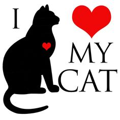 Like cat lady loves her 3 cats