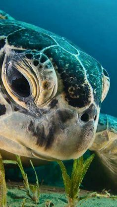 Photograph by Dmitry Marchenko (via Green Sea Turtle Picture -- Underwater Wallpaper -- National Geographic Photo of the Day) Regard Animal, Animals Beautiful, Cute Animals, Animals Sea, Hello Beautiful, Beautiful Eyes, Absolutely Gorgeous, Fauna Marina, Photo Animaliere