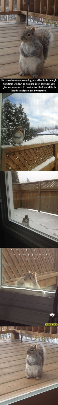 This is so cute! We have two friends who do this.  Visitor Who Comes Every Day For Nuts