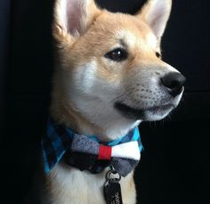 Dogs love bow ties. Barky Bows - Dog bows barkybow.com