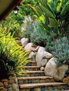 A Laguna Beach Garden