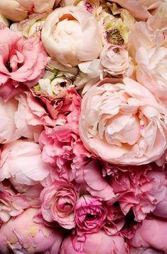 Pink peonies ✿⊱╮ by VoyageVisuel