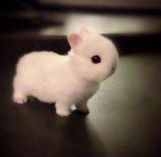 there are two things that are adorable about this rabbit is how small it is and how big its eyes are!