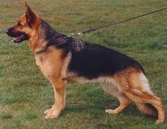 My next dog... ;)