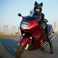 More on The Meowtorcycle Helmet