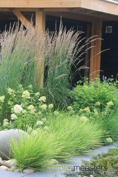 hydrangea garden care I love ornamental grasses! Back Gardens, Outdoor Gardens, Different Shades Of Green, Green Shades, Hydrangea Garden, Limelight Hydrangea, Hydrangea Paniculata, Design Jardin, Modern Garden Design