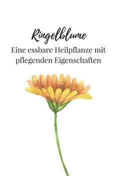 Die Ringelblume lässt sich vielfältig einsetzen. Vor allen Dingen bei Hautirritationen wirkt so hervorragend. Aber auch für selbstgemachte Cremes sind die Ringelblumen Blütenblätter ideal!