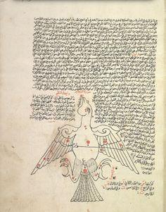 Cygnus (al-dajajah), the swan. (Constellations of the northern hemisphere). [Ṣuwar al-kawākib] [صور الكواكب] Creator: Ṣūfī, ʻAbd al-Raḥmān ibn ʻUmar, 903-986 صوفي، عبد الرحمن بن عمر Origin: [1607] According to the colophon, copied on 4 Ramaḍān 1015 (fol. 40b). Reading statement in the name of Ibrāhīm ibn al-Shaykh Muḥammad, Jumādá al-Ulá 1114 [1702] (fol. 43b).