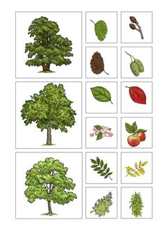6 Worksheets Plant Shapes and Sizes OwlMail Baeume Blaetter und Fruechte √ Worksheets Plant Shapes and Sizes . 6 Worksheets Plant Shapes and Sizes . Free Printable Shape Tree in Worksheets Play School Activities, Montessori Activities, Autumn Activities, Dinosaur Activities, Learning Cards, Kids Learning, Printable Shapes, Free Printable, Teaching Geography
