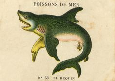 Le Requin, Poissons de Mer ~ this French blogger posts tons of vintage ephemer -- no telling what you might find here