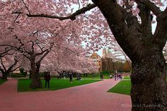 University of Washington Quad <3