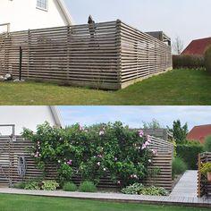 Tänk vad växter och blommor kan göra! Det är två år mellan bilderna, före och efter trädgårdsgången kom till 🌾🌸🌿🌸🌾 #trädgårdenföreochefter #trädgårdsgång #klätterrosor #trädgård #trädgårdsliv #trädgårdslycka #trädgårdsinspo #trädgårdsinspiration #utemiljö #trädgårdsgrind #trädgårdsglädje #trädgårdsdesign #mygarden #garden #gardeninspo #gardendesign #mygarden #garden #gardeninspo #gardeninspiration #minträdgård Modern Backyard, Backyard Landscaping, Front Porch Design, Outdoor Privacy, Farm Fence, Colorful Garden, Diy Garden Decor, Garden Projects, Garden Inspiration