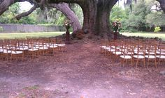 Intimate wedding ceremony at the majestic Tree of Life in Audubon Park. Featured are natural wood chiavari chairs with ivory cushions. Intimate Wedding Ceremony, Outdoor Ceremony, New Orleans Party, Backyard Birthday Parties, Audubon Park, Wedding Rentals, Park Weddings, Tree Of Life, Corporate Events