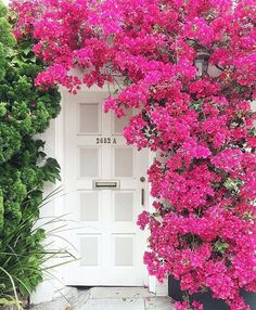 Beautiful bougainvillea-covered white paneled front door.