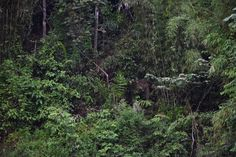 Wild elephant in Khao Sok National Park. Photographed from a kayak by John Williams. Khao Sok National Park, National Parks, Thailand Adventure, Wild Elephant, Elephants, Trekking, Kayaking, Remote, Trail