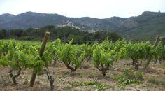 Bodega en Sitges. Viva la primavera!!!!!!
