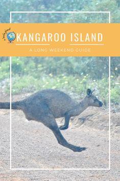 How to spend a long weekend on Kangaroo Island. kangaroos, koalas, dolphins, seals, sandboarding and food! South Australia, Australia Travel, Cheap City Breaks, New Zealand Adventure, Kangaroo Island, Kangaroos, South Island, Great Barrier Reef, Long Weekend