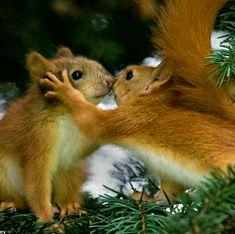 Cute Animals Kissing, Super Cute Animals, Adorable Animals, Cute Squirrel, Baby Squirrel, Squirrels, Squirrel Memes, Secret Squirrel, Animals And Pets