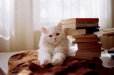 white Persian. We had one with odd eyes. One blue eye and one yellow eye. Named Frodo... He was great...