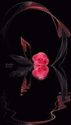 Animated Gif by Victor_Coj Flowers Gif, My Flower, Pretty Flowers, Beautiful Gif, Beautiful Roses, Gif Animé, Animated Gif, Water Reflections, Glitter Graphics