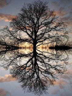 Beautiful tree and reflection