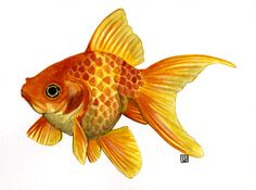 Art by Lauren: Paintings Watercolor Fish, Watercolor Animals, Watercolor Paintings, Koi Art, Fish Art, Fish Drawings, Animal Drawings, Poisson Combatant, Golden Fish