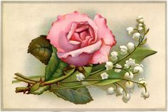 Vintage Roses and Lily of the Valley Image - The Graphics Fairy