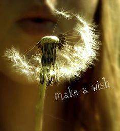 Ist Wish Gut