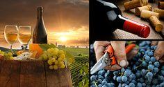 Expo Veneto: Wine - Feeding - Events