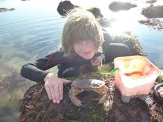 Huge crab, tiny bucket. Shell Island, Bucket, Buckets, Aquarius