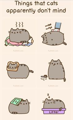 Pusheen | Pusheen The Cat :D | Pinterest What cat want? - Catsincare.com
