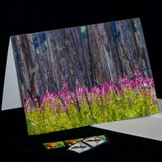 Photo Cards, Photo Greeting Cards, Blank Cards, Pink Flowers, My Etsy Shop, Notes, Pacific Northwest, Hdr, Artwork