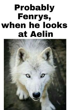 Probably Fenrys when he looks at Aelin. His fascinated face is...😂😂😂