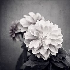 "Dahlia Print - black and white flower photography, grey dark gray nature photo, neutral modern wall art picture botanical decor, ""Dahlia"""