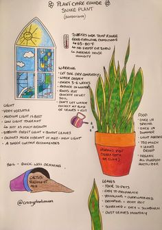 Care for sanseveria House Plants Decor, Garden Plants, Indoor Plants, Household Plants, All About Plants, Growing Plants Indoors, Inside Plants, Plant Guide, House Plant Care