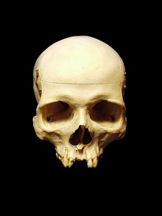 Skull Reference, Drawing Reference, Human Skeleton Anatomy, Human Skull, Skull And Bones, Skull Art, Black And White Photography, Rock And Roll, Sketches