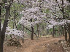Hwangrung Mt in Busan