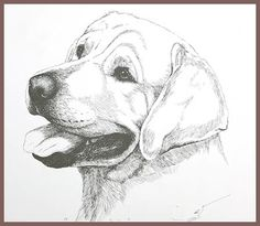 drawing labradors | labrador line drawing