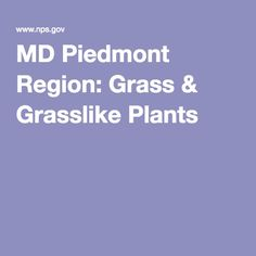 MD Piedmont Region: Grass & Grasslike Plants Piedmont Region, Howard County, Native Plants, Ferns, Shrubs, Landscape Design, Grass, Gardening, Exterior