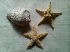 Estrellas y caracola