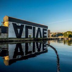 mslovejoy:  ALIVE