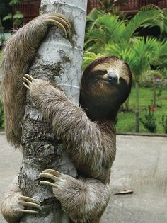 The cutest animal ever: melt at the Power of Sloth - in pictures ...