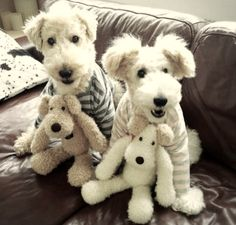 Pup, pupper, puppest Coffin Nails coffin nails w jewels Chien Fox Terrier, Wirehaired Fox Terrier, Wire Fox Terrier, Airedale Terrier, Welsh Terrier, Terrier Dogs, Silly Dogs, Cute Dogs And Puppies, I Love Dogs